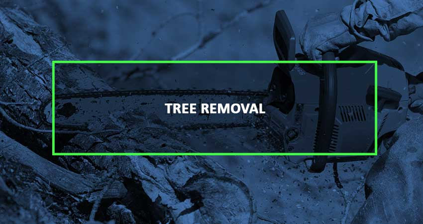 tree-removal-blue-2